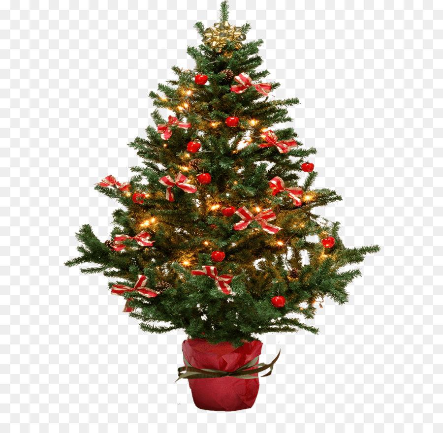 Noël Sapin Arbre Png Noël Sapin Arbre Transparentes