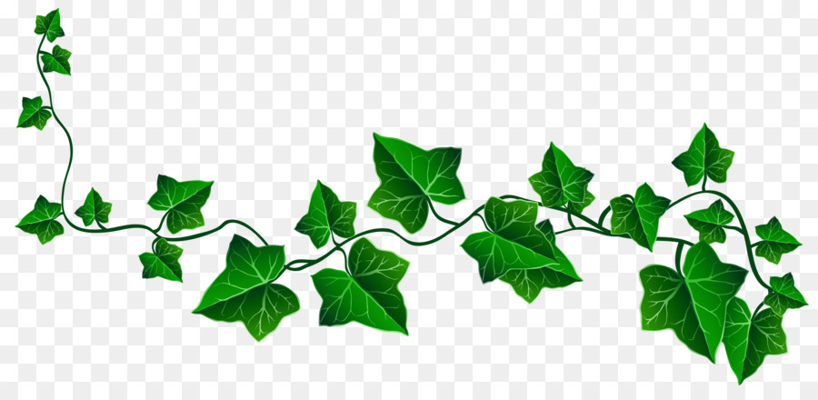 Ivy De La Vigne Dessin Png Ivy De La Vigne Dessin