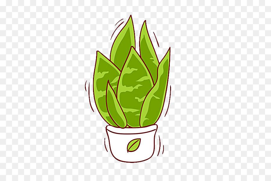 Laloe Vera Plante Dessin Png Laloe Vera Plante Dessin