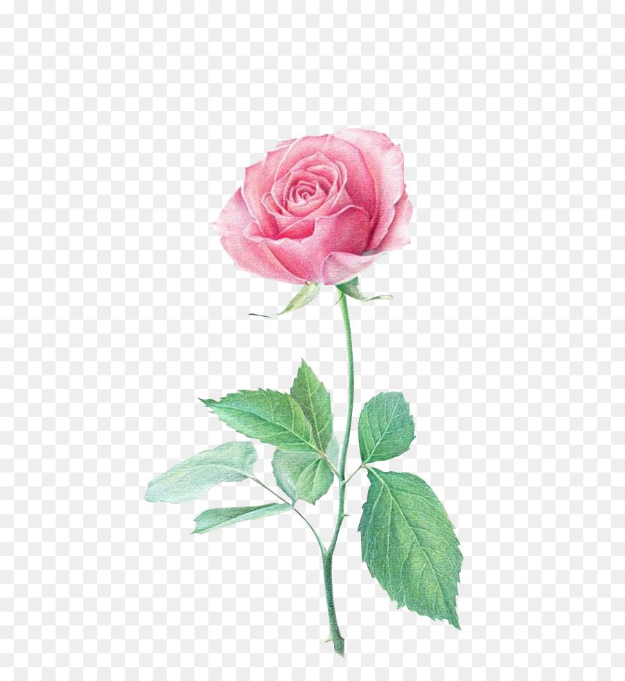 Crayon De Couleur Fleur Dessin Png Crayon De Couleur