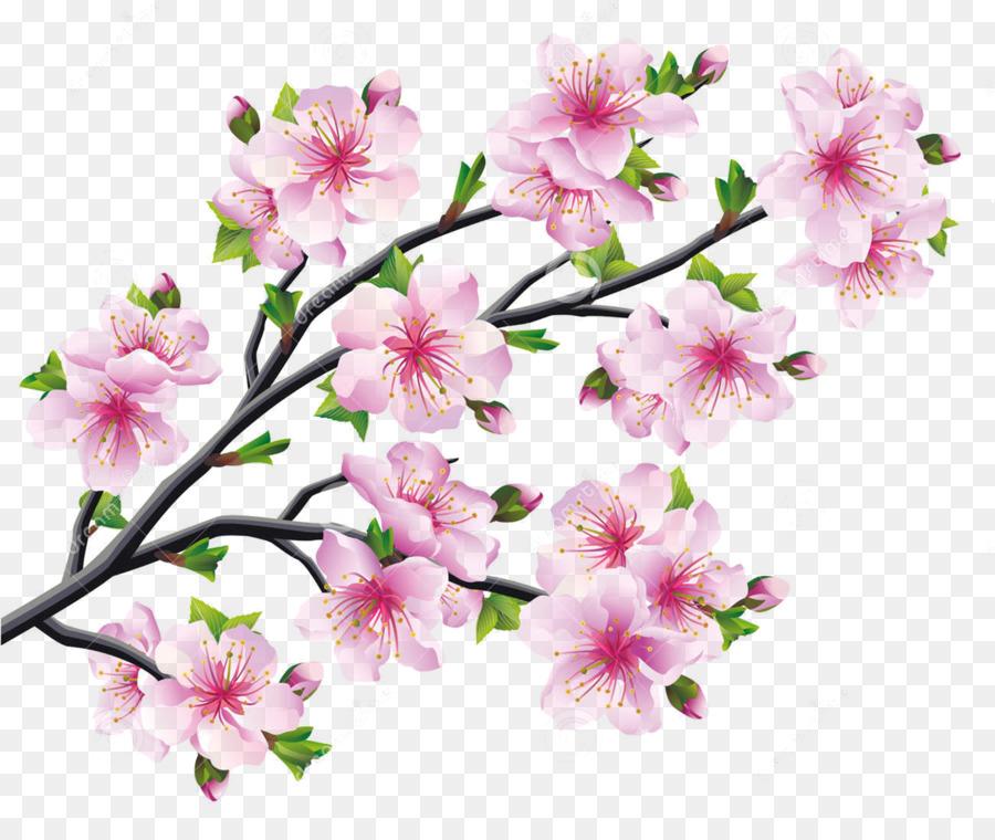 Fleur De Cerisier Fleur Dessin Png Fleur De Cerisier Fleur Dessin Transparentes Png Gratuit