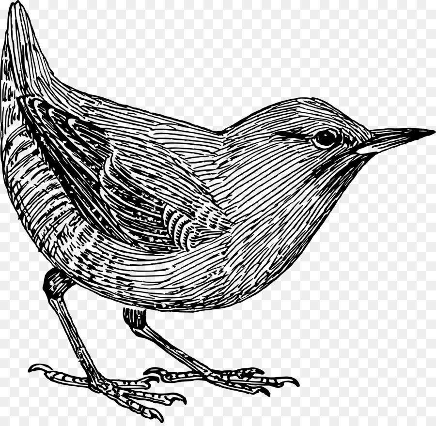 Dessin Oiseau Noir Et Blanc Png Dessin Oiseau Noir Et