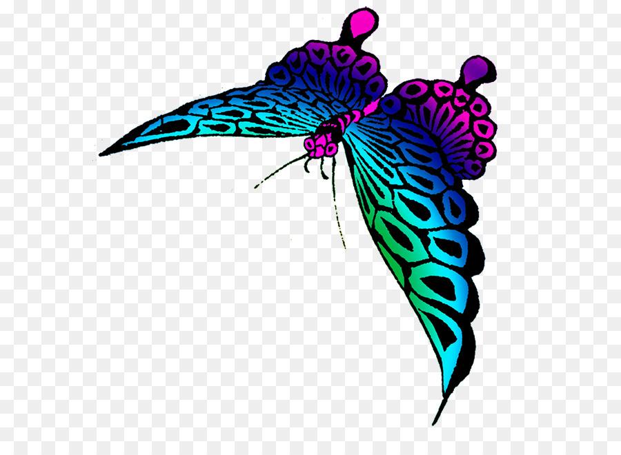Papillon Couleur Dessin Png Papillon Couleur Dessin Transparentes Png Gratuit