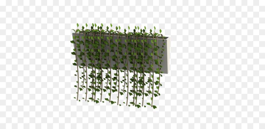Plante De La Vigne Conception Assistée Par Ordinateur Png