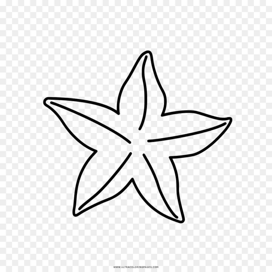 Livre De Coloriage, Dessin, Les étoiles De Mer PNG   Livre De ...