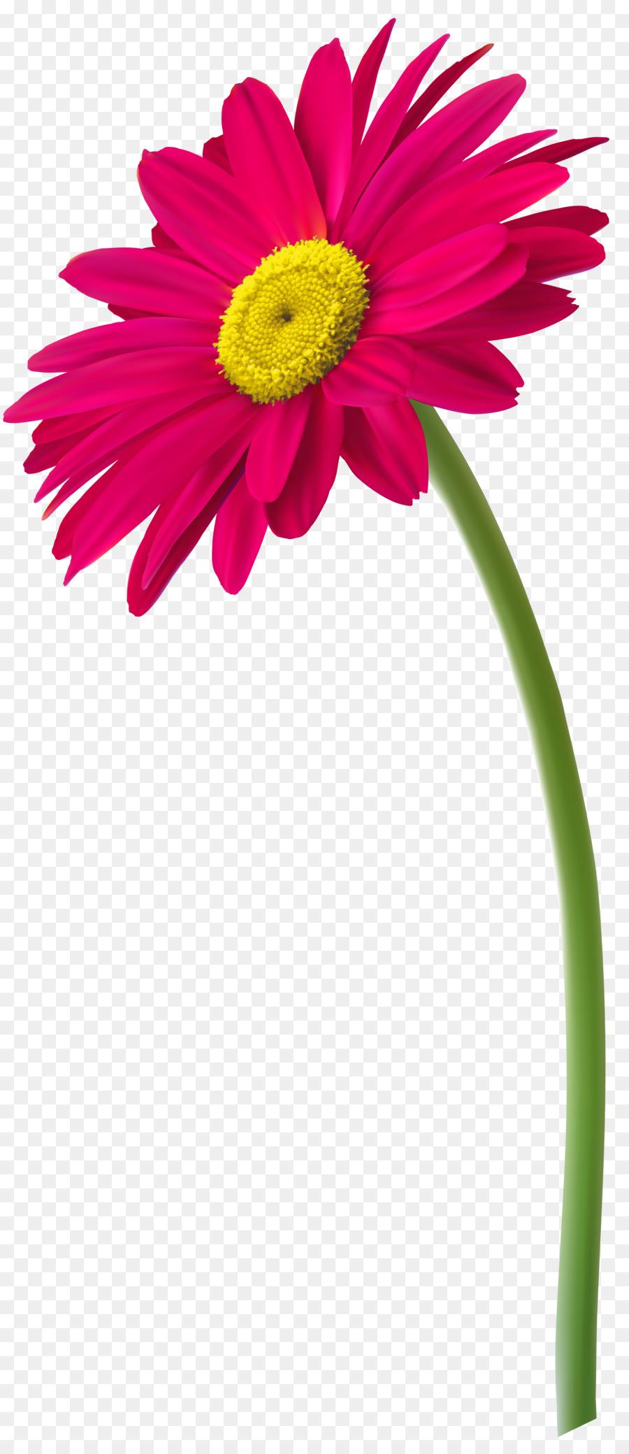 Marguerite Du Transvaal Dessin Fleur Png Marguerite Du Transvaal Dessin Fleur Transparentes Png Gratuit