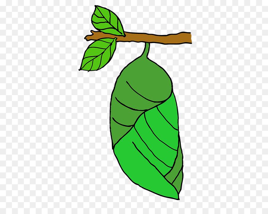 Papillon Dessin La Pupe