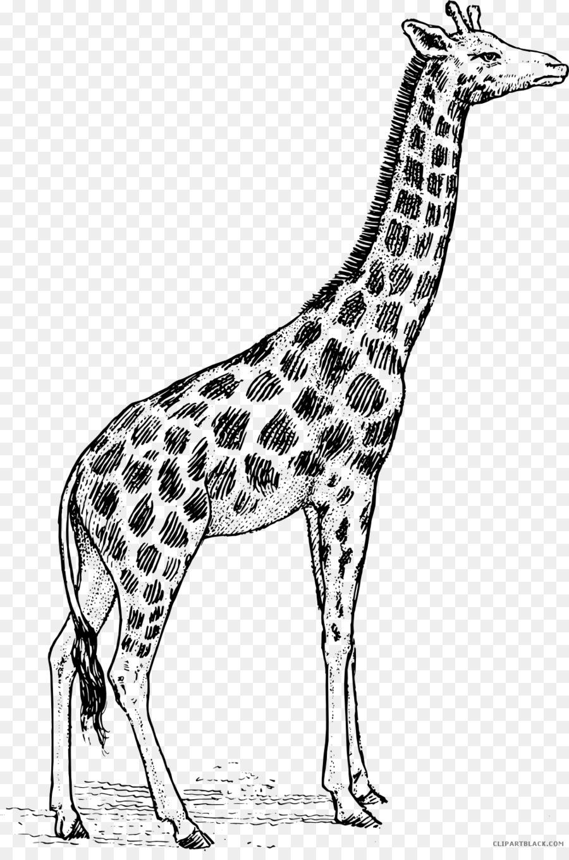 Girafe Noir Et Blanc Lart En Ligne Png Girafe Noir Et Blanc Lart En Ligne Transparentes Png Gratuit