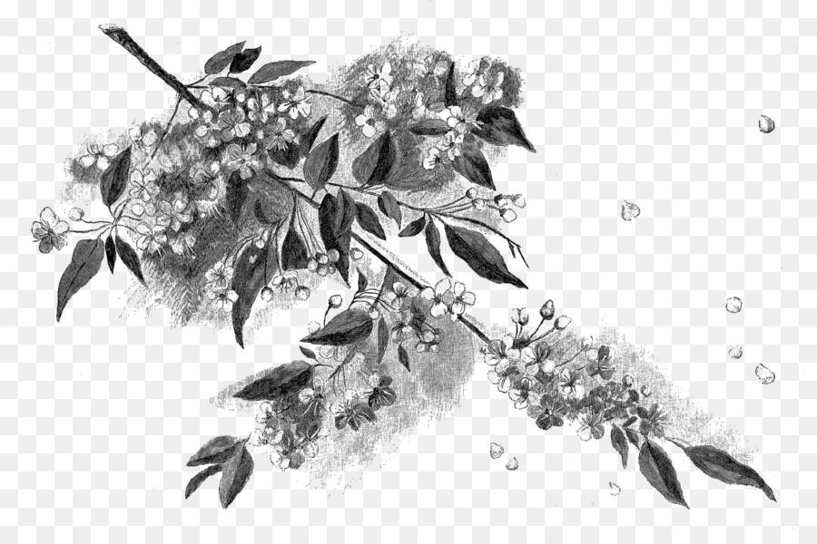 Noir Et Blanc Dessin Fleur De Cerisier Png Noir Et Blanc