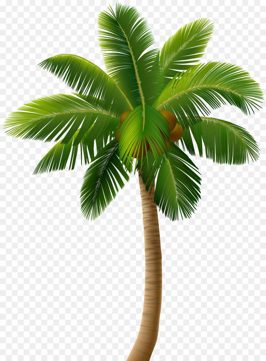 Dessin Royaltyfree Les Palmiers Png Dessin Royaltyfree Les Palmiers Transparentes Png Gratuit