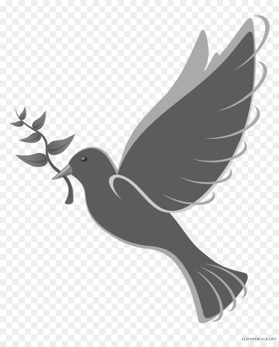Les Pigeons Et Les Colombes Pigeon Domestique Colombes Symboles Png Les Pigeons Et Les Colombes Pigeon Domestique Colombes Symboles Transparentes Png Gratuit